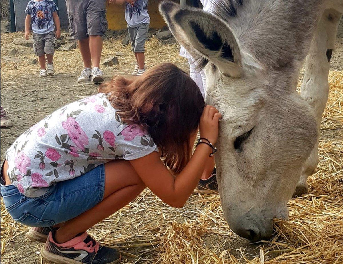 Travel to Malaga donkey